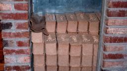 Bio Bricks